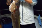 Overnight Fishing Charter Success with a large Amberjack aboard Crusader 1