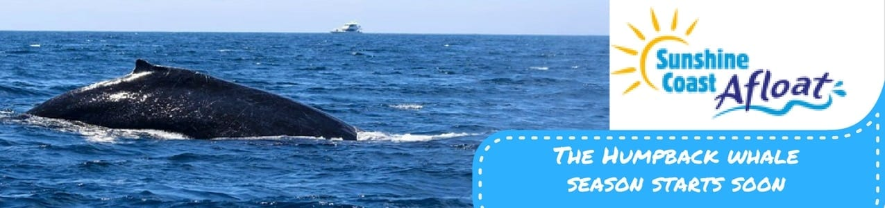 2017's First Whales sighted!