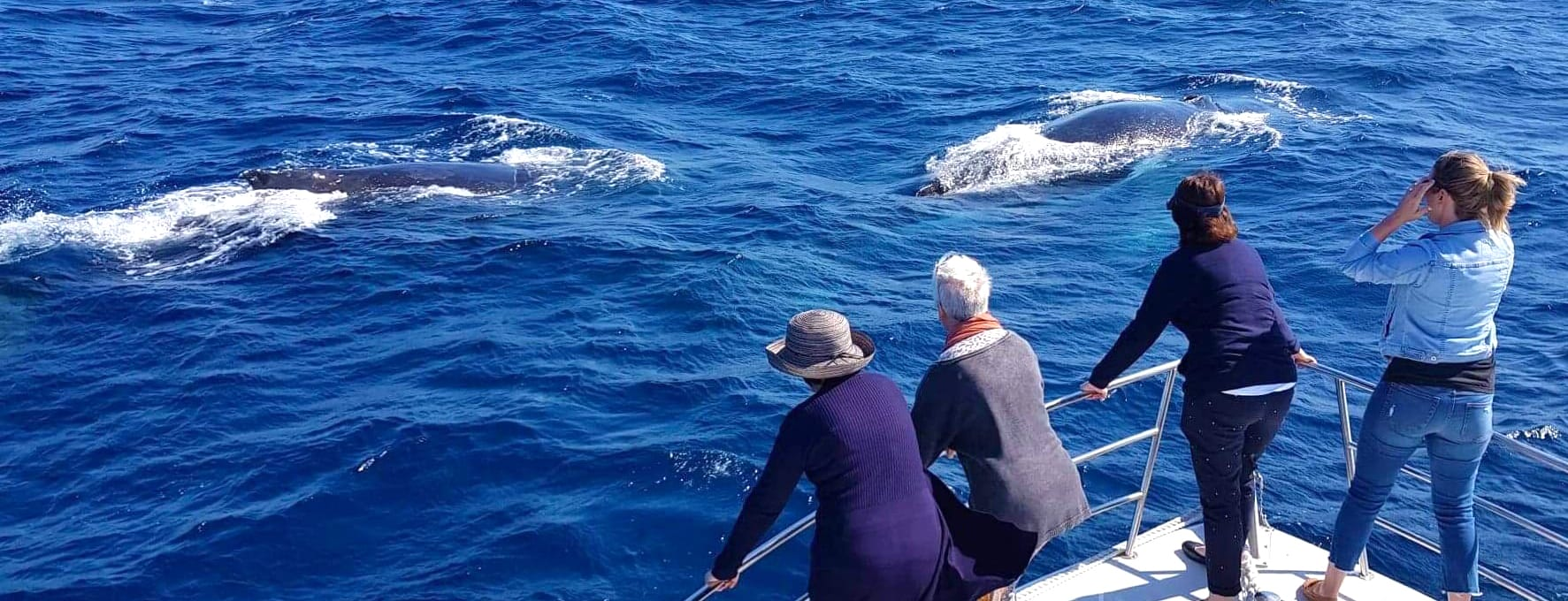 "Whale Watching ""without the crowds"" on the Sunshine Coast"